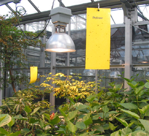 research papers on greenhouse workers Commonly found among the wealthy class citizens, eventually the science of  greenhouse growing expanded to universities where research.