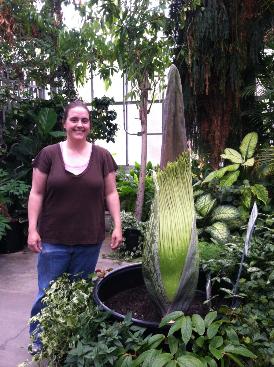 Titan Arum Woody on May 8, 2013